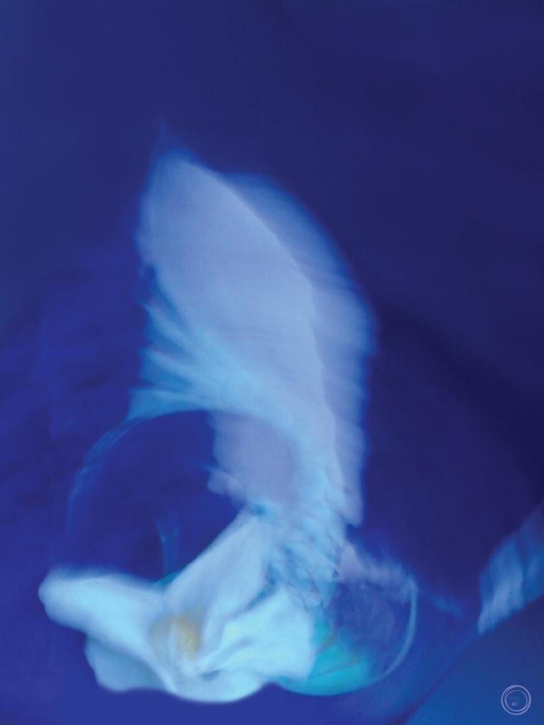 la danza delle ánemos II