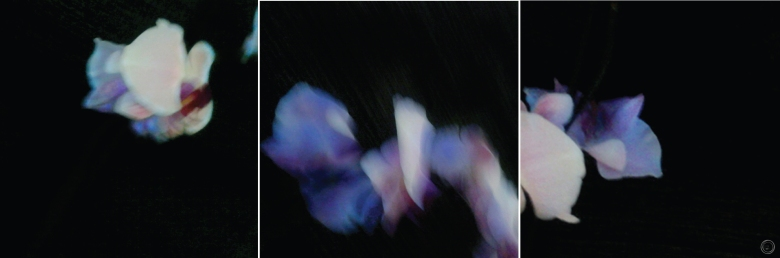 trittico nero_ánemos-01-01